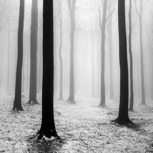 Tree hamony by Martin Rak
