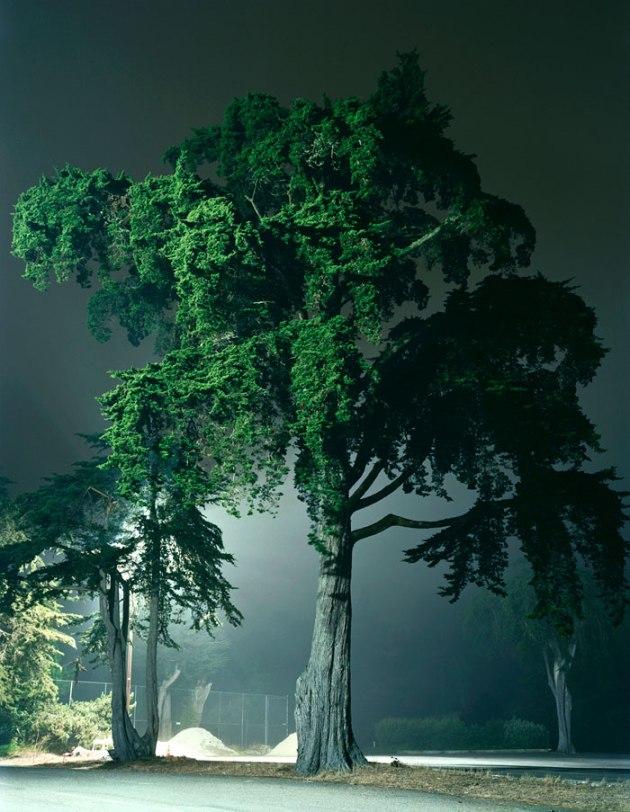 Amanda Friedman trees