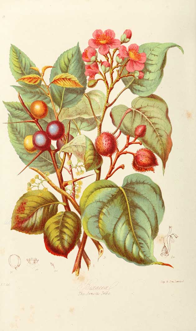 Illustrations of the natural orders of plants with group