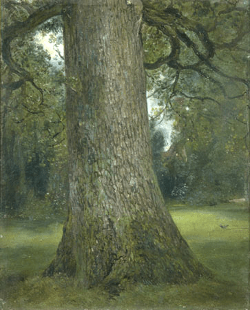 Constable Elm Tree