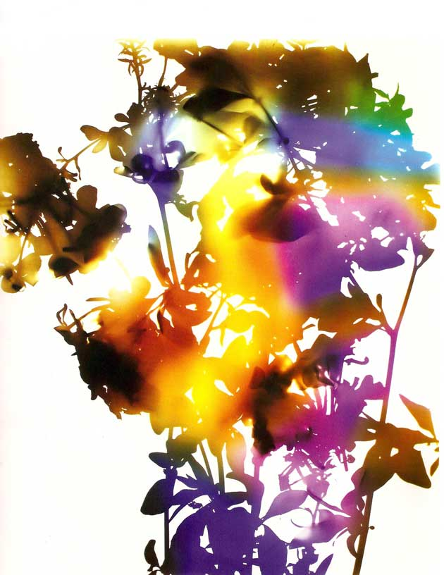 James Welling photogram
