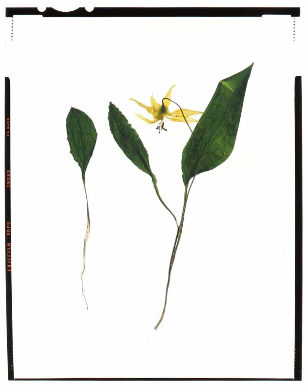 Botanical photography