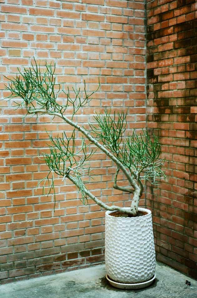 plant photographer