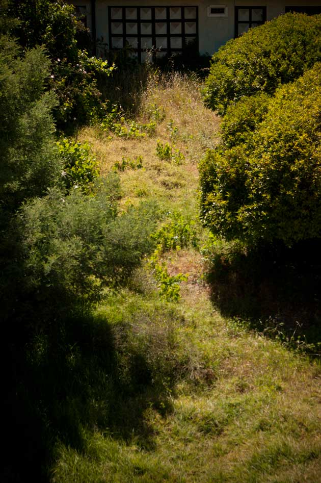 vegetation photography