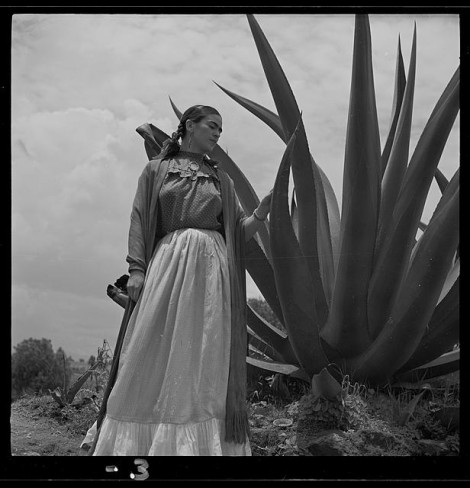 Frida and the Agave