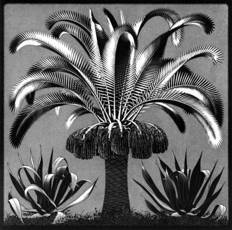 Escher's plants