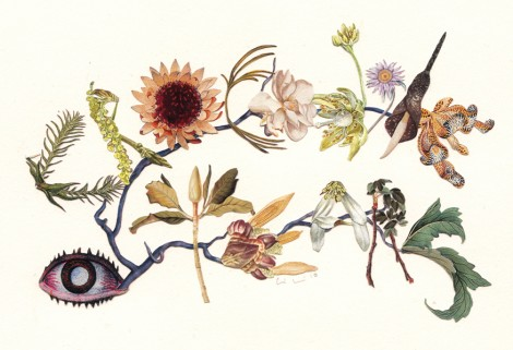 Collage artist Alexis Anne Mackenzie hybridises plants with other things