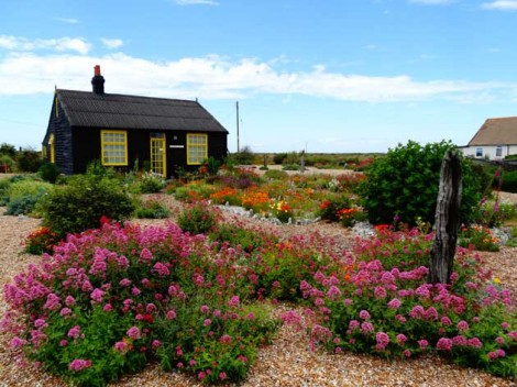 Plant & Art Havens: Dungeness