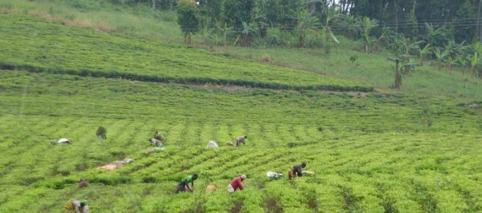 plantation-the