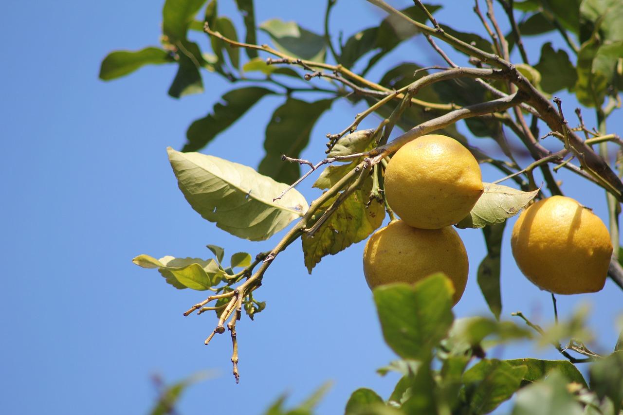 L'huile essentielle de citron, propriétés et utilisation sans danger