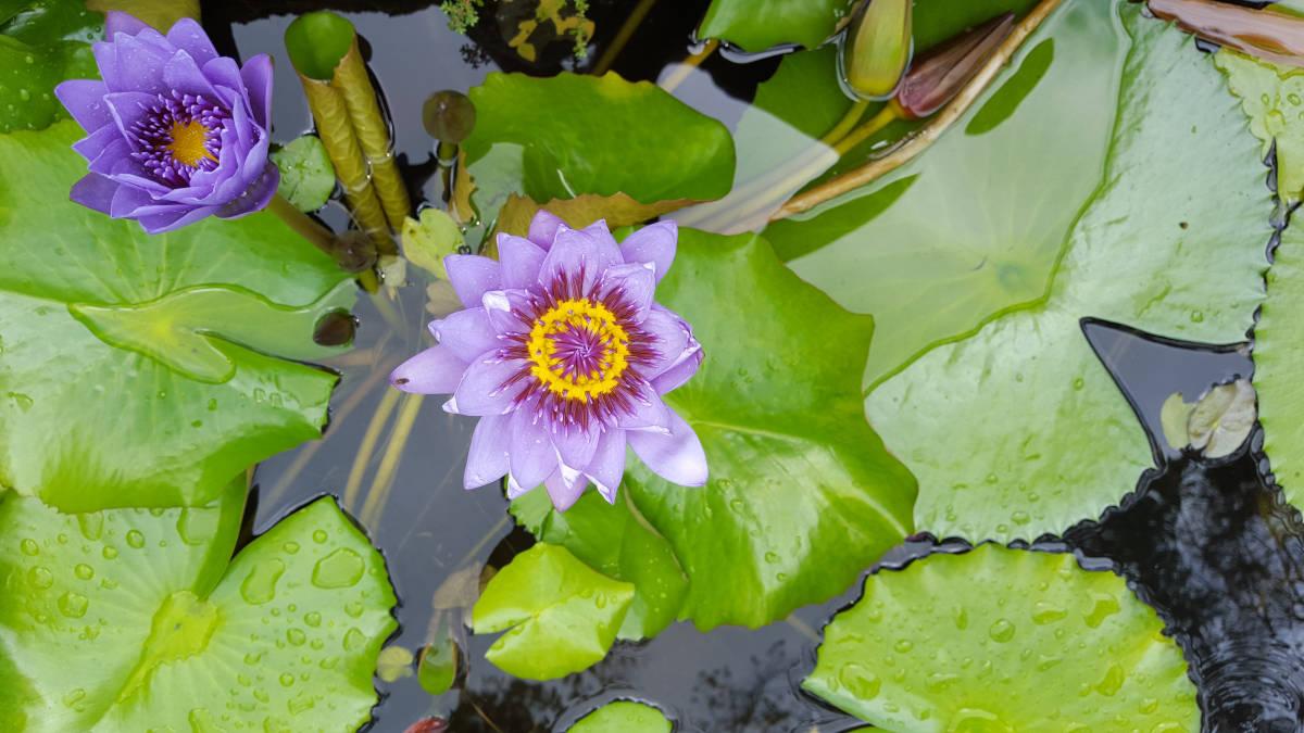 Des plantes pour le bien-être: ce que les blogueurs en disent