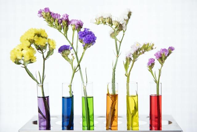Les métiers des plantes médicinales