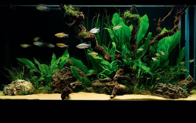 aquarium beginnen: teveel verlichting