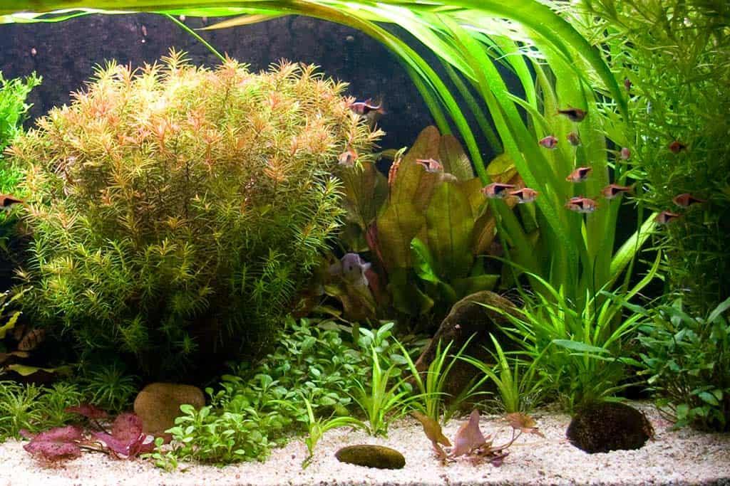 Aquarium beginnen: vissen toevoegen
