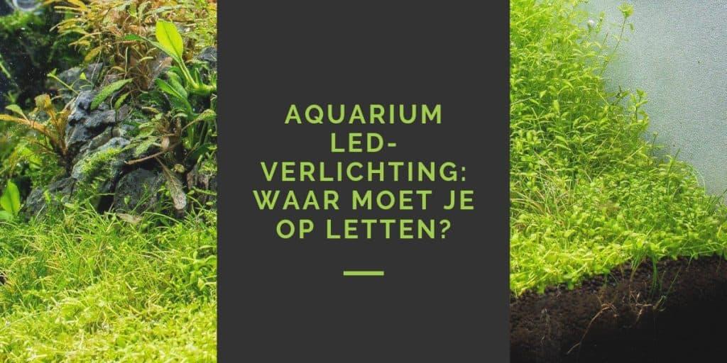 LED-verlichting in aquarium