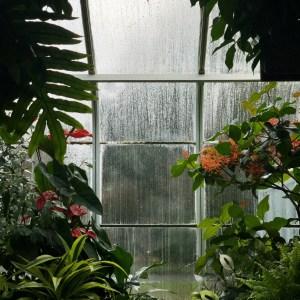 Planter i drivhus