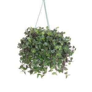 Tradescantia 'Green Hill' (Vaderplant) - P 18 cm