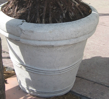 Fiberglass planter cracked by expanding roots