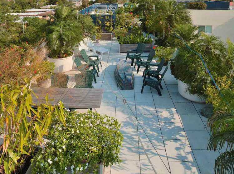 Roof top planters create a jungle that cools a building saving the penthouse 20% on electricity