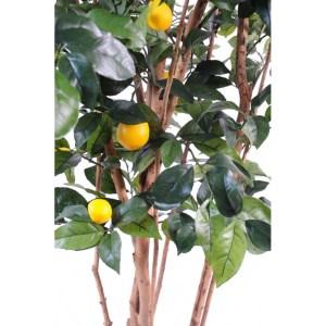 citronnier semi-artificiel