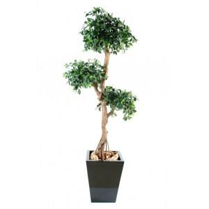 Ficus retusa semi-artificiel