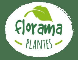 terre pour plante carnivore