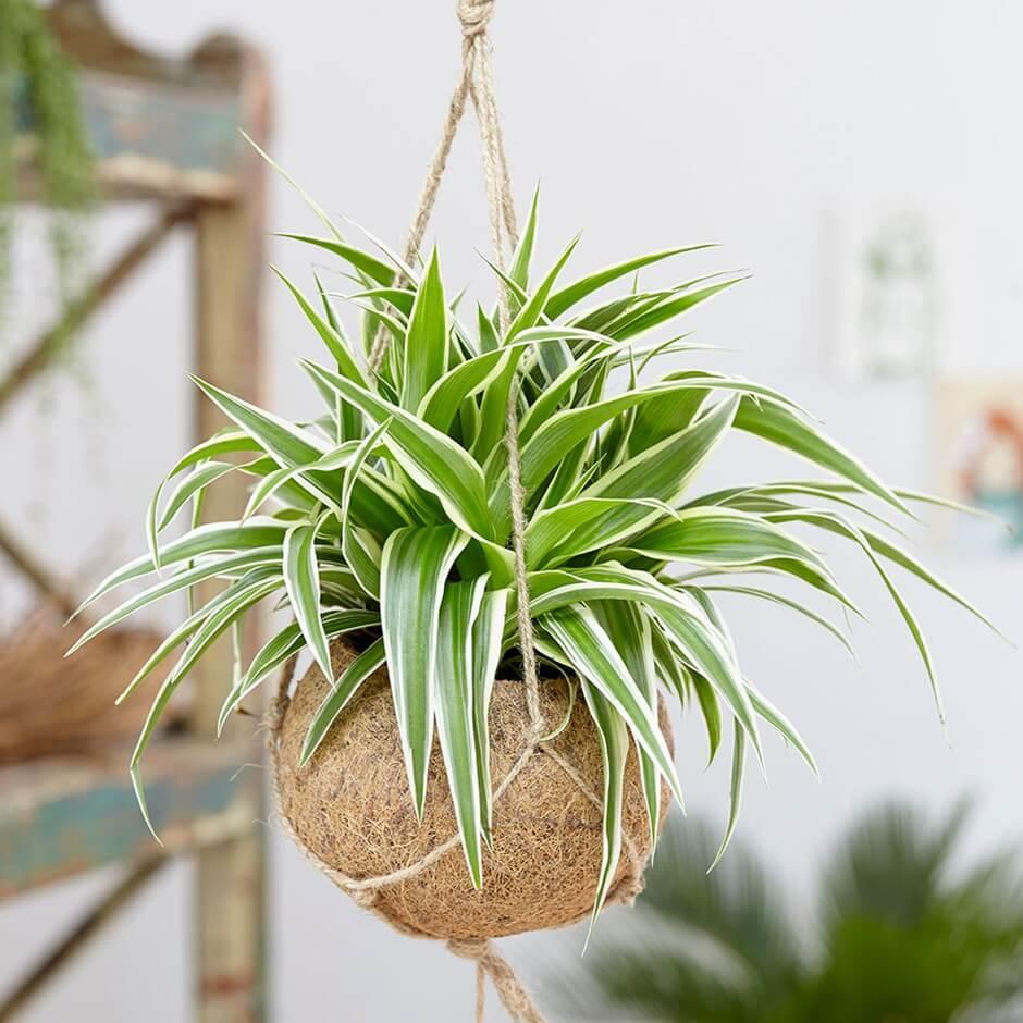 Nasa Indoor Plants