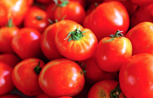 Plant Life 360 - Tomatoes
