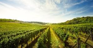 Industries - Vineyards