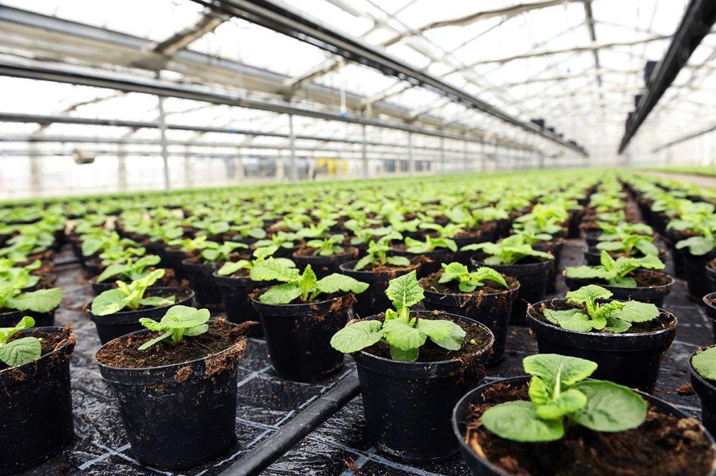 Plant Life 360