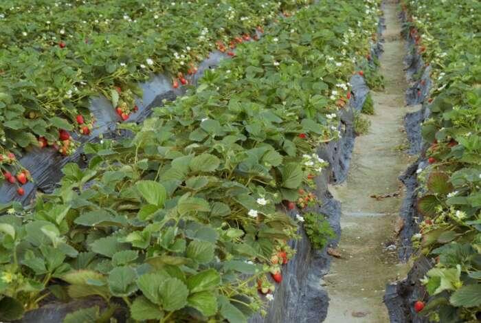 Plant Life 360 - Strawberry Farm