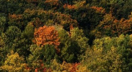 birch tree bark and skin cancer