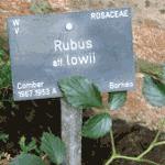 RBGE Plant labels