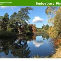 Bedgebury Pinetum update