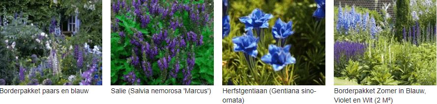 Paars en blauw bloeiende planten kopen