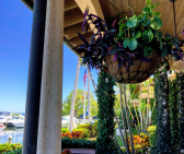 colorful trailing plants hanging
