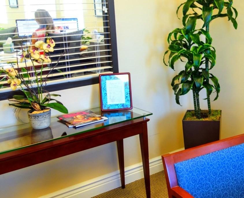 Plant In Office Corner