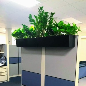 Cubicle Plants Office plants
