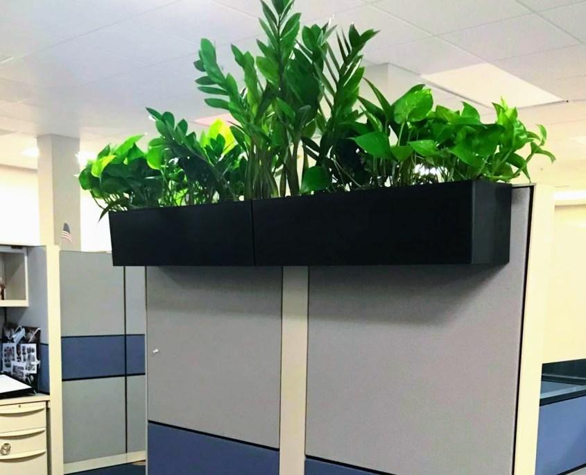 Cubicle Plants Office plants