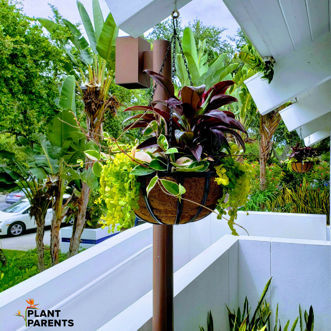 Plant Basket at Resort Club