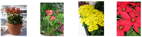 seasonal-color