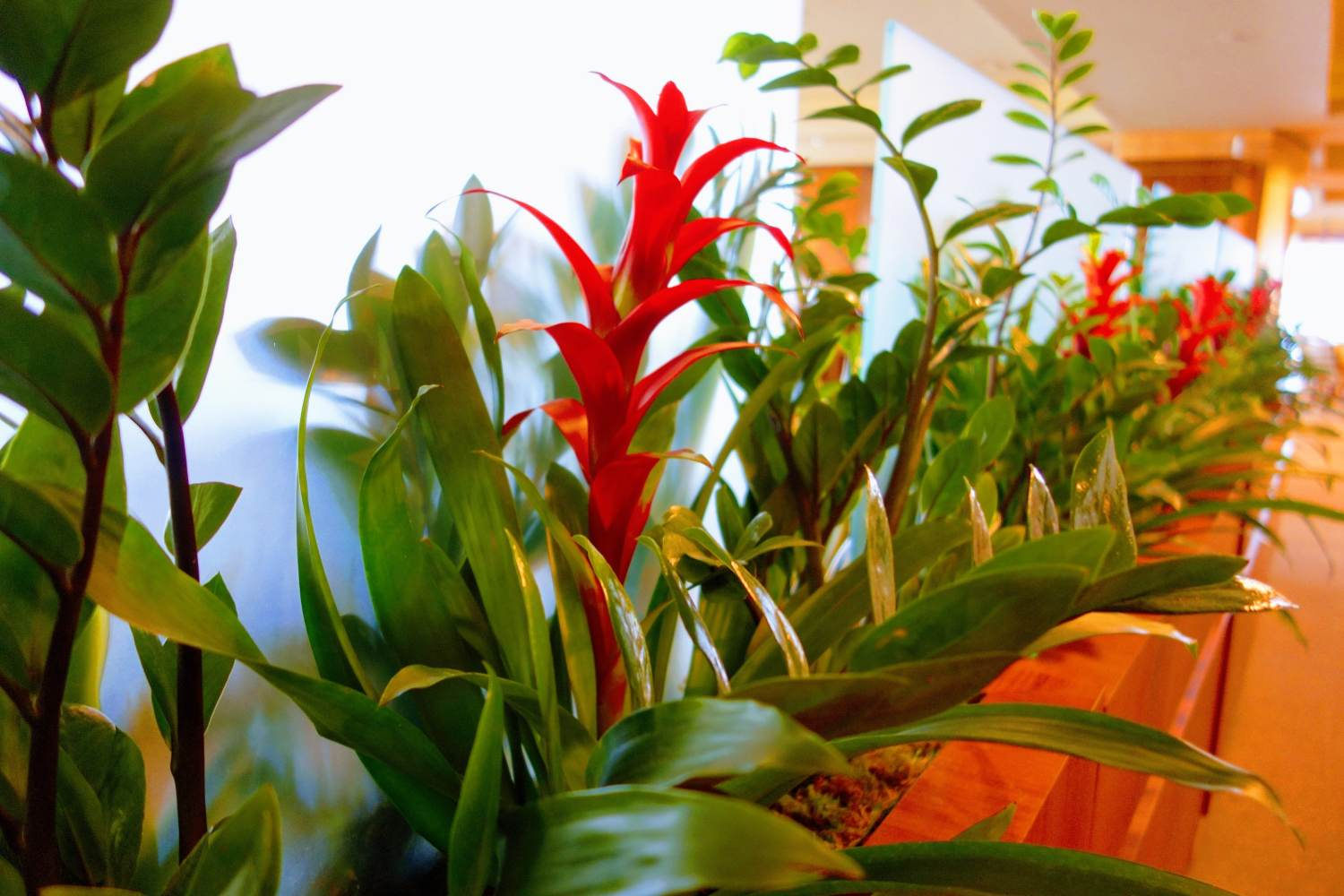 Live plants in dining area