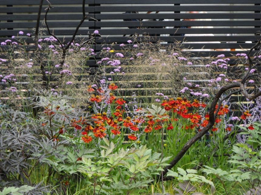 HC flower show slatted black fence red plants