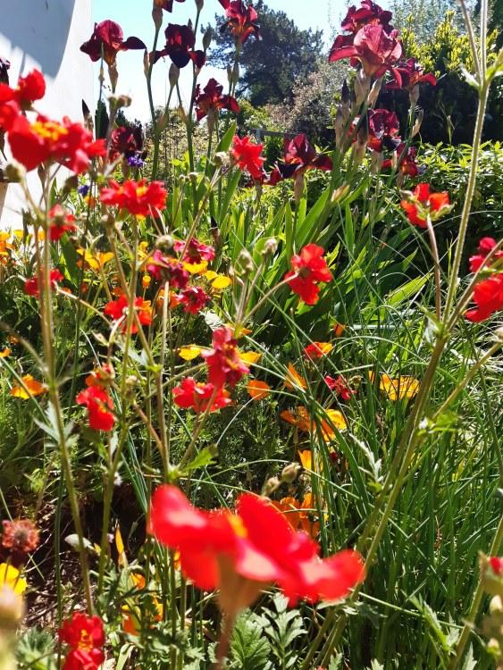 Garden design ideas and inspiration