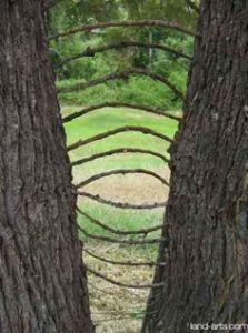 natural twig sculpture in fork two trees