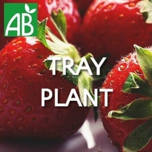 Petits Plants Fruits Rouges Fraisier Cirafine Tray Plants