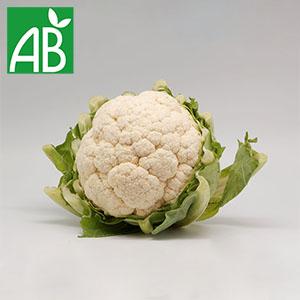 Plant chaud de chou-fleur Orkney biologique à grandes feuilles vertes rondes et fruit à branches et têtes blanches