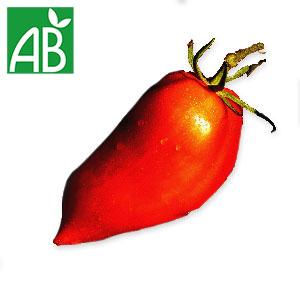 Plant chaud de tomates Andine Cornue biologique à fruit longs, pointus et rouges