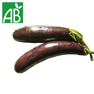 Plant chaud d'aubergine Baluroi biologique à fruit allongé et violet