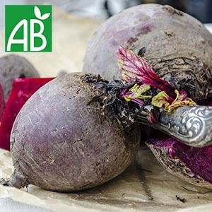 Plant chaud de betterave Alvro Mono biologique à fruit violet (chair et peau violette)